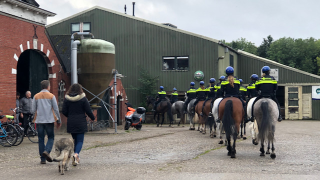 Politiepaarden in manege De Oude Held