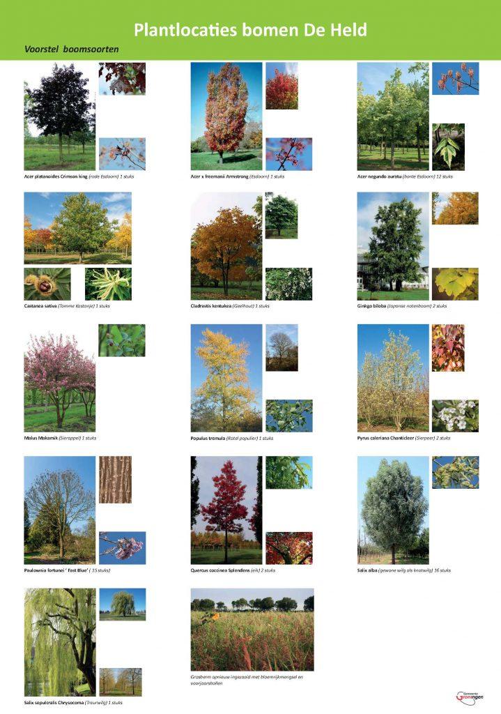 Voorstel bomen De Held